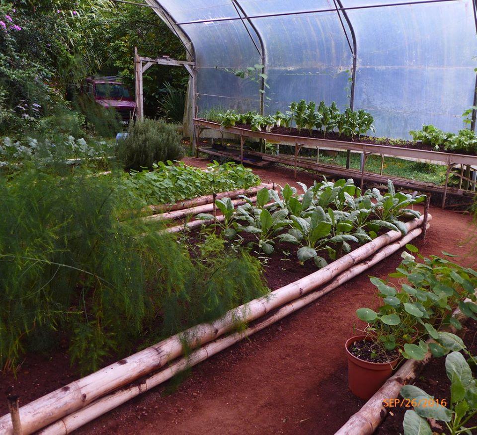 CMC Organic Garden 2016-2017 Season