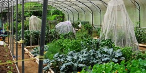 Organic Farm and Botanical Gardens