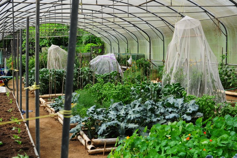 Organic farm and botanical gardens (11)