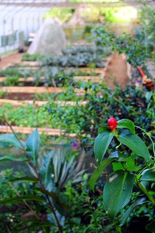 Organic farm and botanical gardens (5)
